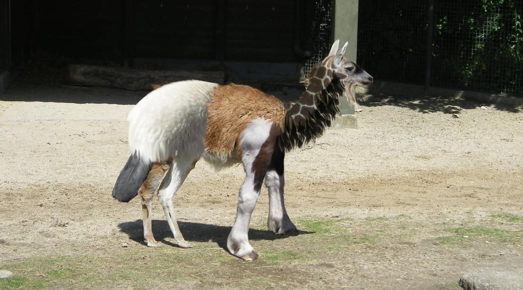 Nature Talent Llama